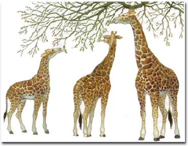 Warm-Up: How did giraffes evolve to have long necks ...